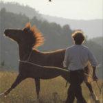 De boodschap van paarden - Klaus Ferdinand Hempfling (boek)