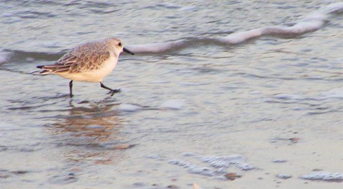 Nieuwe Vogelgidsen Recensie Beoordeling Inhoud