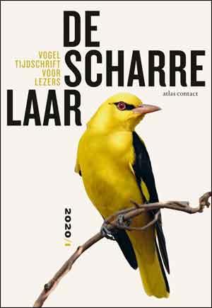 De Scharrelaar 3 Vogeltijdschrift Recensie