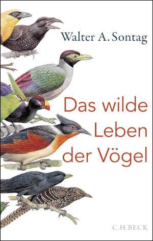 Walter A. Sontag Das wilde Leben der Vögel