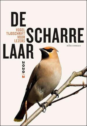 De Scharrelaar 4 vogeltijdschrift Recensie
