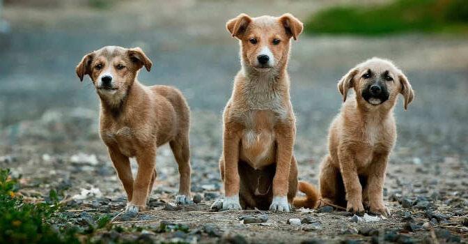Hondenboeken Nieuwe Boeken over Honden